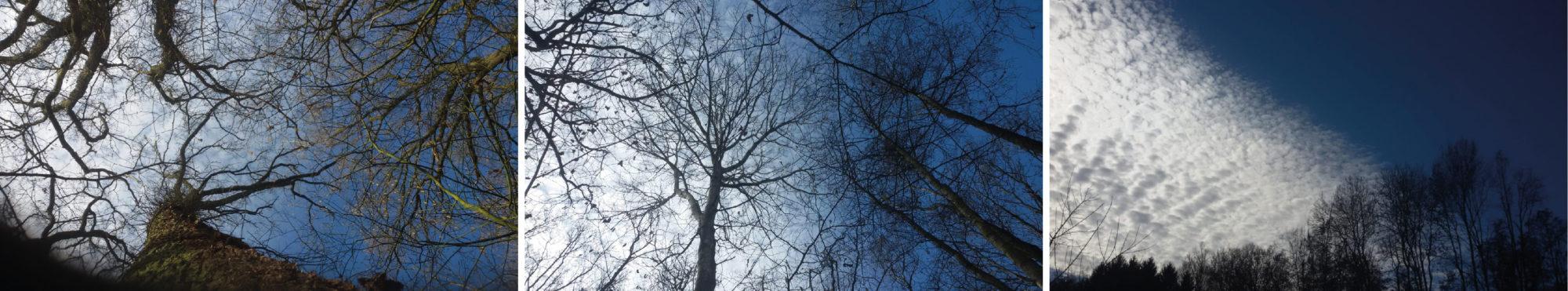 Ferienwohnungen am Wald